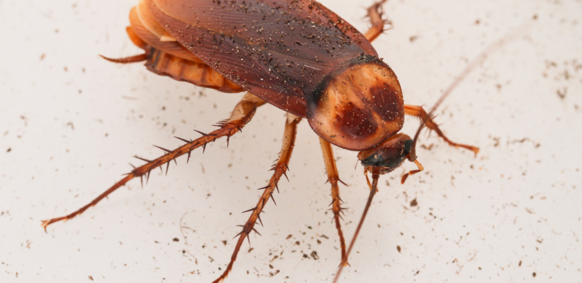 It's cockroach season! Time to take action in your home