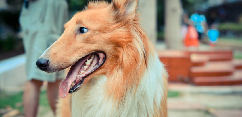Three tips for dog owners desperate to keep their home clean